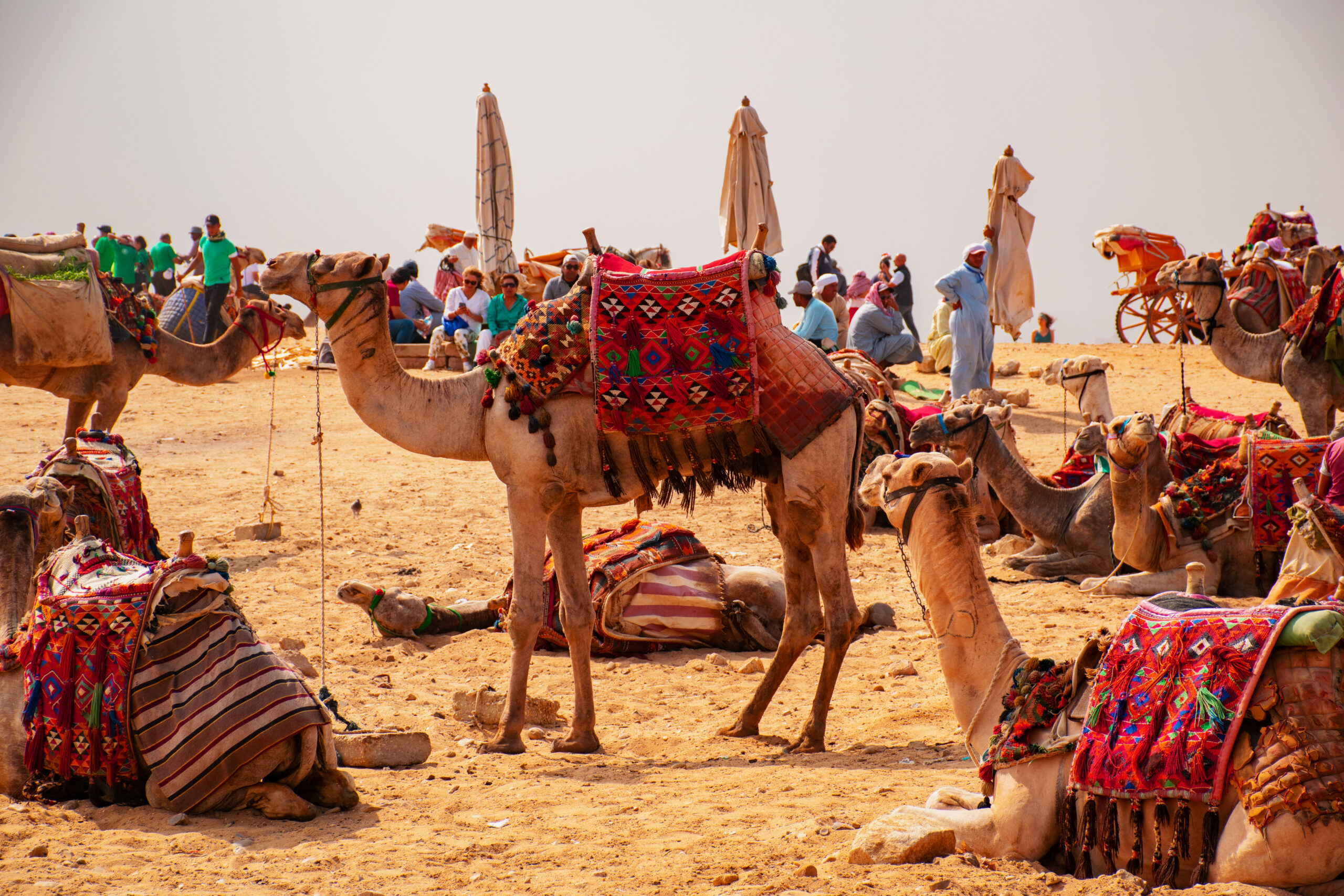 Древний Египет арабская страна