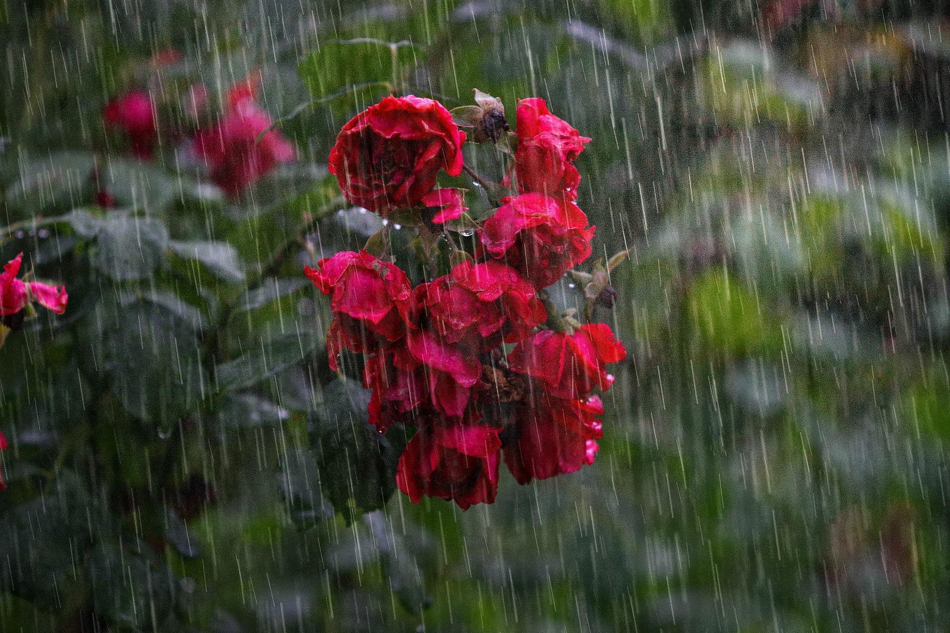 сильный дождь и природа