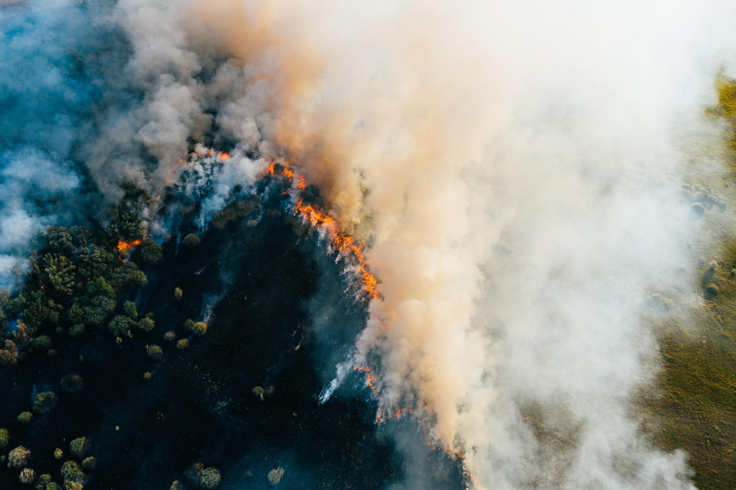 Лесной пожар вид сверху