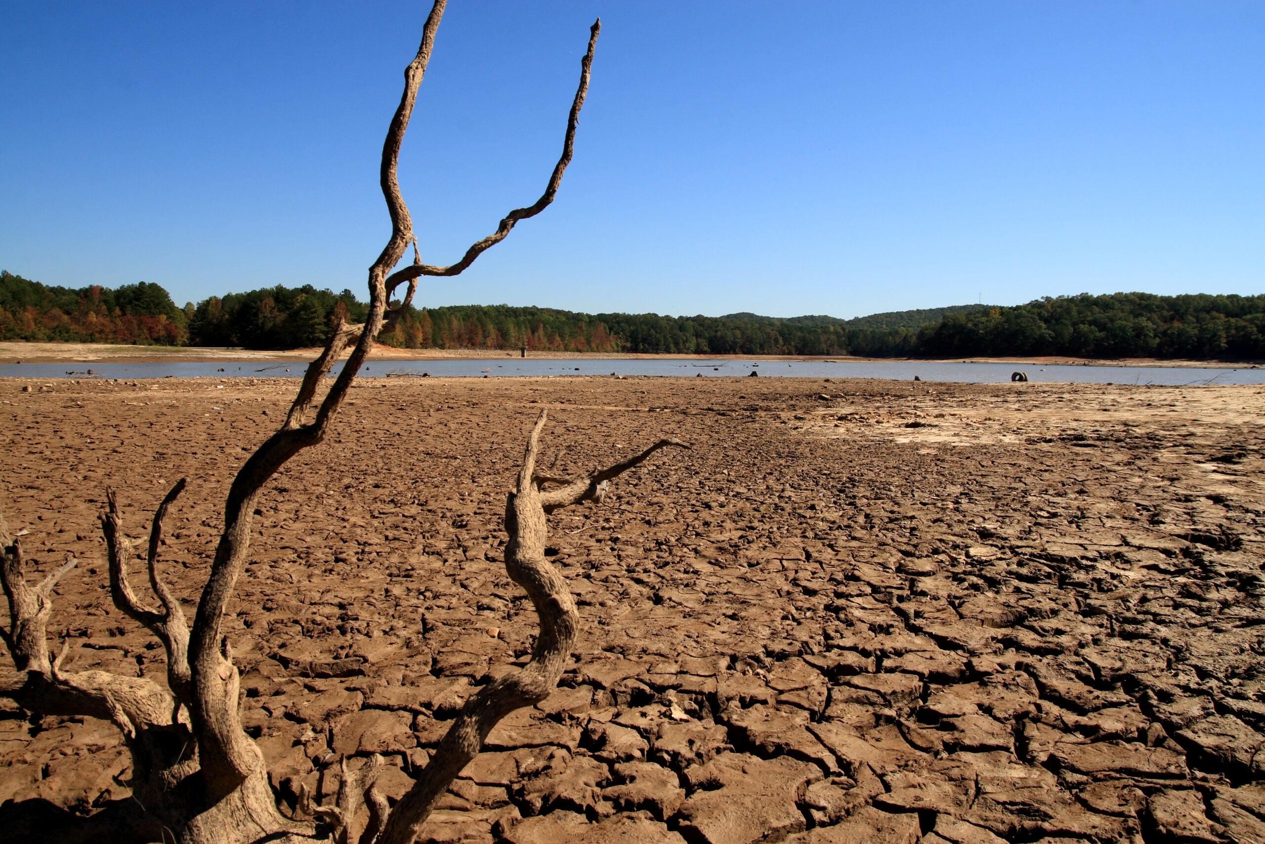 погибшее дерево от засухи