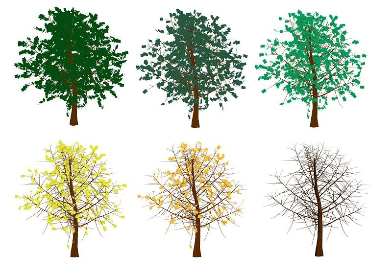 желтеющее дерево